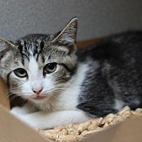 Adopt A Pet :: A219602 - San Luis Obispo, CA
