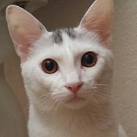 Adopt A Pet :: Bridget - Winchester, CA