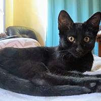 Adopt A Pet :: Magic - La Canada Flintridge, CA