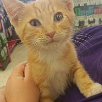 Adopt A Pet :: Aslan - Scottsdale, AZ