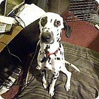 Adopt A Pet :: Stewie - Middletown, PA