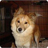Adopt A Pet :: Bailey - Leesport, PA