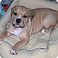 Adopt A Pet :: Kelsie - Minneola, FL