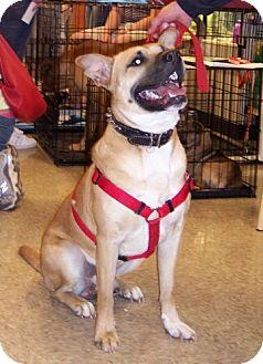 Shepherd (Unknown Type) Mix Dog for adoption in Winder, Georgia - Foster