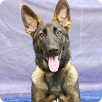 Adopt A Pet :: Heidi - Inverness, FL