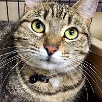 Adopt A Pet :: Vanna - San Carlos, CA