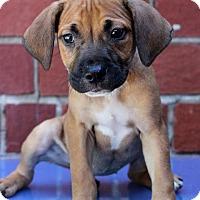 Adopt A Pet :: Betta - Waldorf, MD
