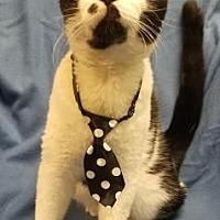 Adopt A Pet :: Alex karev - Anderson, IN