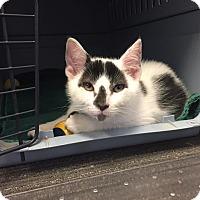 Adopt A Pet :: Sam I Am - Wichita, KS