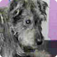 Adopt A Pet :: Beau - Boulder, CO