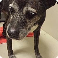 Adopt A Pet :: Walter - Westminster, CA