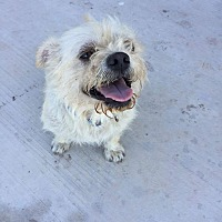 Adopt A Pet :: Elroy - Brownsville, TX