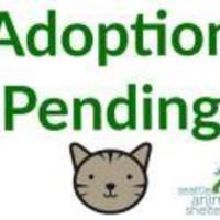 Adopt A Pet :: Rita - Seattle, WA