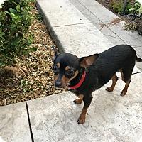 Adopt A Pet :: DELILAH - Vancouver, BC