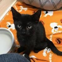 Adopt A Pet :: Henry - Miami, FL