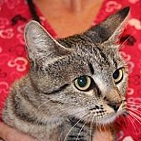 Adopt A Pet :: 360159 - Wildomar, CA