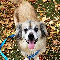 Adopt A Pet :: Kobe - Oakley, CA