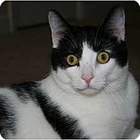 Adopt A Pet :: Blizzard - Greenville, SC