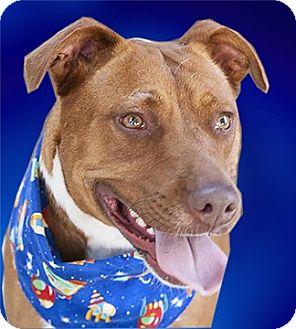 Hound (Unknown Type)/Terrier (Unknown Type, Medium) Mix Dog for adoption in Cincinnati, Ohio - Red
