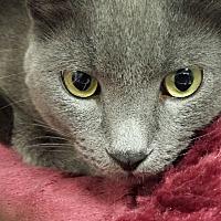 Adopt A Pet :: Merlin - Marietta, GA