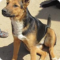 Adopt A Pet :: Suzy - San Ysidro, CA