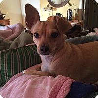 Adopt A Pet :: Jean Paul  - A gentle soul - Corona, CA