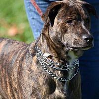 Adopt A Pet :: Linus - Millersville, MD