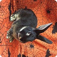 Adopt A Pet :: Hoppz - Paramount, CA