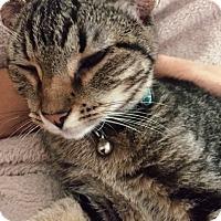 Adopt A Pet :: Stitches - Houston, TX