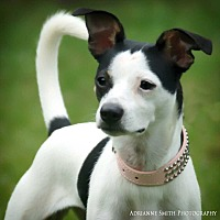 Adopt A Pet :: Kya - Barnesville, GA