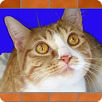 Adopt A Pet :: Jack - Jackson, NJ