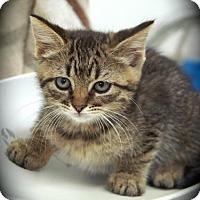Adopt A Pet :: Taffy - Englewood, FL