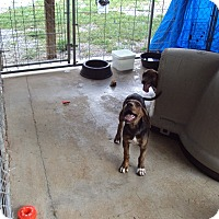 Adopt A Pet :: Rona - Jamestown, TN