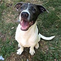Adopt A Pet :: Violet - Vancouver, BC