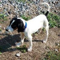 Adopt A Pet :: Mary Kay - Richmond, VA