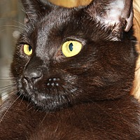 Adopt A Pet :: NATALIE - Clayton, NJ