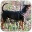 Photo 3 - Miniature Pinscher/Terrier (Unknown Type, Medium) Mix Dog for adoption in Sedona, Arizona - Holly