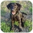 Photo 2 - Labrador Retriever Dog for adoption in Montevallo, Alabama - Maxwell