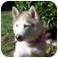 Photo 3 - Siberian Husky Dog for adoption in Boyertown, Pennsylvania - Misty 2
