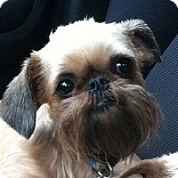 Adopt A Pet :: XENA - ADOPTION PENDING - Salem, OR