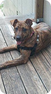 Shepherd (Unknown Type)/Boxer Mix Dog for adoption in Hueytown, Alabama - Kiya