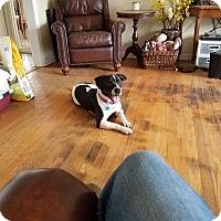Adopt A Pet :: Pippie - Aurora, IL