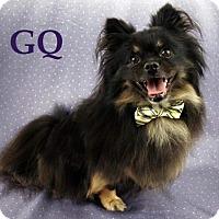 Adopt A Pet :: GQ - Shreveport, LA