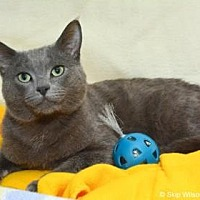 Adopt A Pet :: Trundel - Neenah, WI