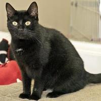 Adopt A Pet :: Poppy - Cashiers, NC