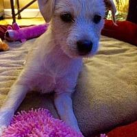 Adopt A Pet :: Melanie - Herndon, VA
