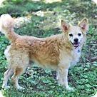 Adopt A Pet :: SCOTCH