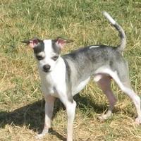 Adopt A Pet :: Luca - Umatilla, FL