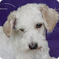 Adopt A Pet :: Hawkeye - Rancho Mirage, CA