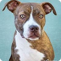 Adopt A Pet :: MARLEE - Phoenix, AZ